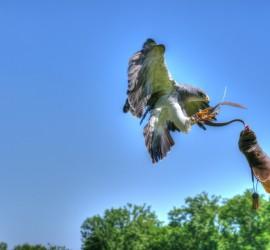 Adler landet